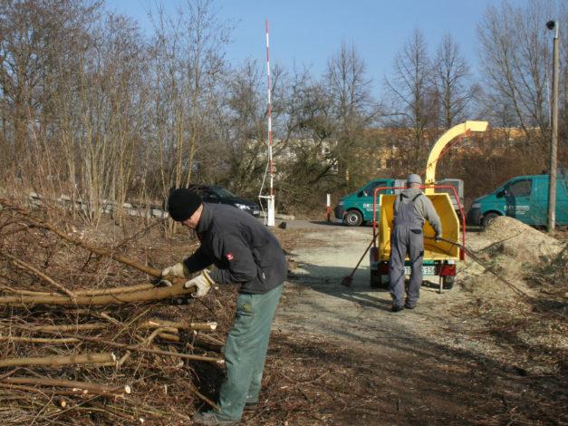 Personen verschneiden Bäume